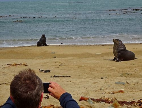Photo from 14 Day South Island Wildlife Itinerary - Day 6: Catlins Coast