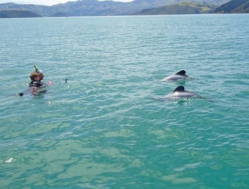 Photo from 14 Day South Island Wildlife Itinerary - Day 1 & 2: Akaroa