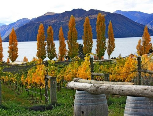 Photo from 26 Day New Zealand Romance Itinerary - Day 9 & 10: Wanaka